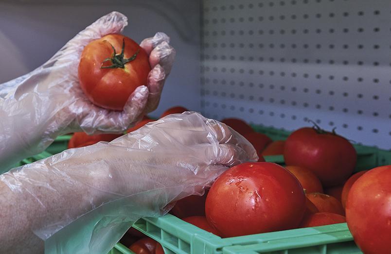 552 Nouveau gant polyéthylène pour usage alimentaire